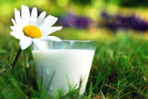 Молоко - основное сырье для производства молочной продукции